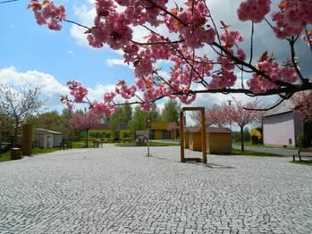 Náměstí s mateřskou školou.. - Prodej zemědělského objektu 6900 m², Krásná