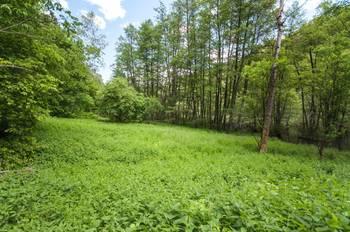 Prodej pozemku 13685 m², Kokořín